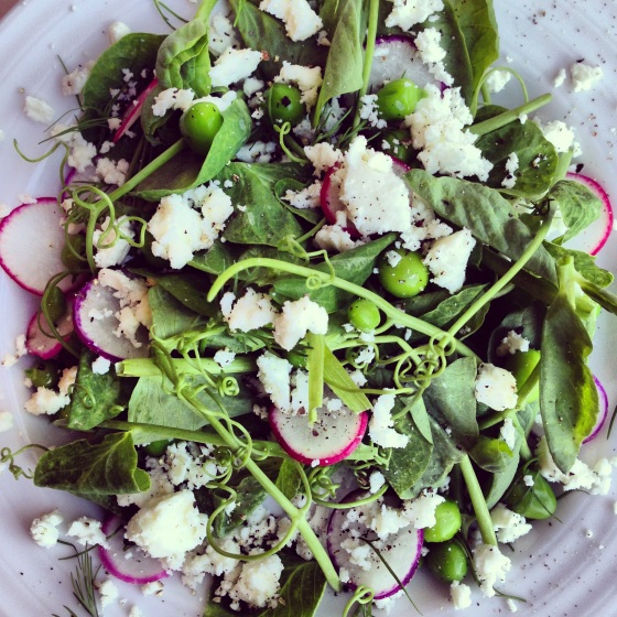 Spring Pea Tendril Salad